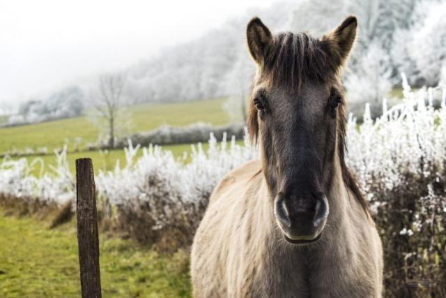 Photographe animalier Reims, shooting photo extérieur, Cheval en nature glacé , Photographie couleur