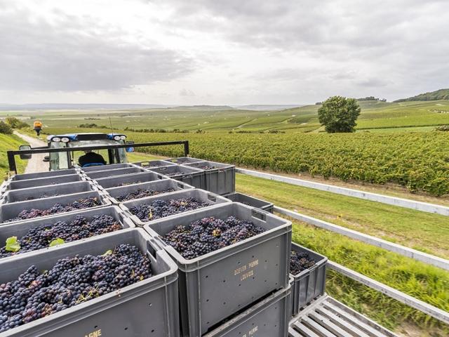 Vignes de Champagne Ardenne